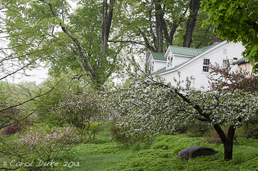 fringe crabapple tree bloom timeBlooming Apple and Crabapple Orchard in North Gardens Self iQa243lW